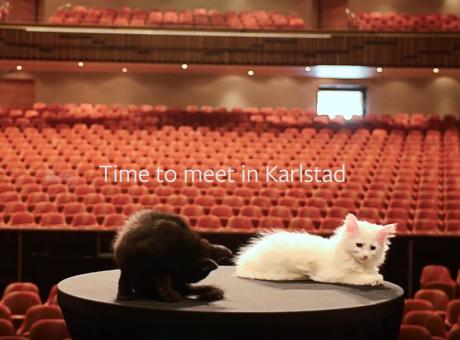 Katter på Karlstad CCC